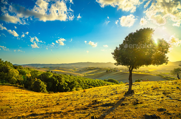 Tuscany countryside panorama and windy olive tree on sunset. Pis - Stock Photo - Images