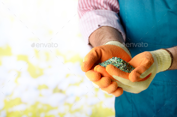 Farmer shows fertilizers in his hands weared in gloves - Stock Photo - Images
