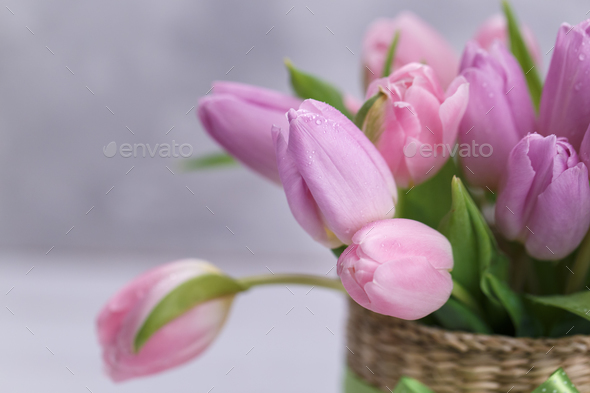 Pink tulips close up - Stock Photo - Images