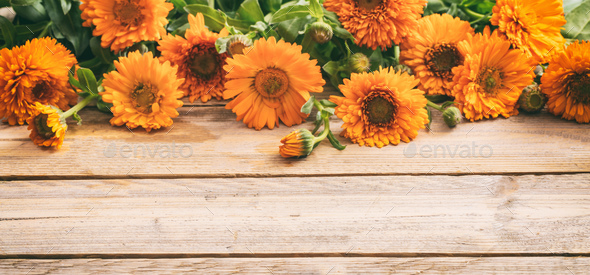 Calendula on wooden table, banner, copy space, details - Stock Photo - Images
