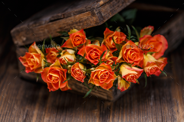 Bouquet of orange roses - Stock Photo - Images