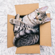 Cat in the box - PhotoDune Item for Sale