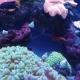 Goldfish in Freshwater Aquarium - VideoHive Item for Sale