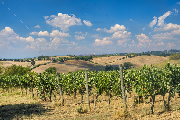 Summer landscape in the Chianti region (Tuscany) - Stock Photo - Images