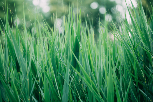 Natural Green Greenery Grass Stems. - Stock Photo - Images