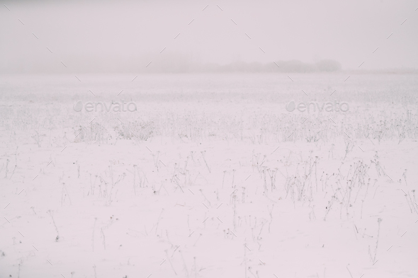 Snow-covered Field In Winter Frosty Day. Minimalism In Winter La - Stock Photo - Images