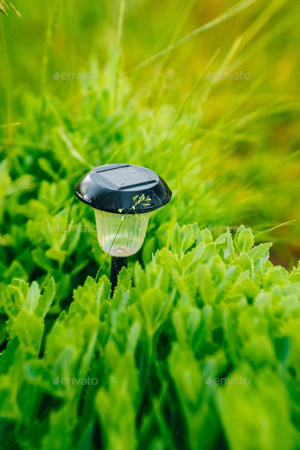Small Solar Garden Light, Lantern In Flower Bed. Garden Design. - Stock Photo - Images