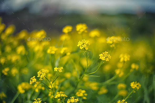 delicate yellow flowers background - Stock Photo - Images