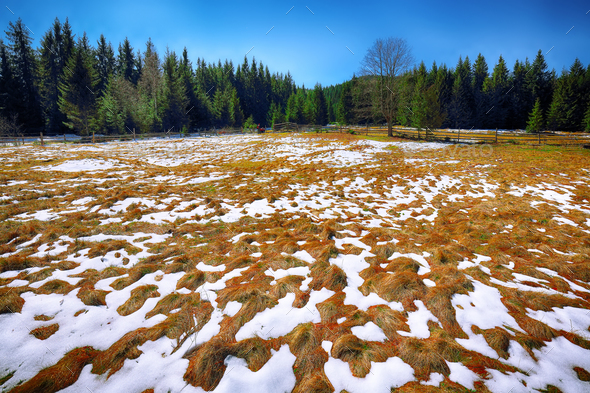 Spring mountain landscape with snow and fir forest - Stock Photo - Images