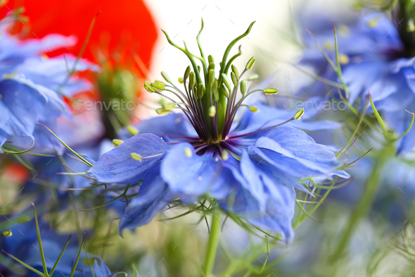 Cornflower in the bouquet - Stock Photo - Images
