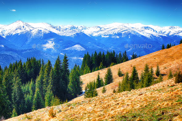 dyllic Spring alpine morning landscape with fresh green meadows - Stock Photo - Images