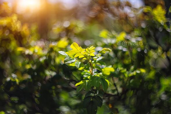 twinkling lights vivid color blurred bokeh spring from leaf back - Stock Photo - Images