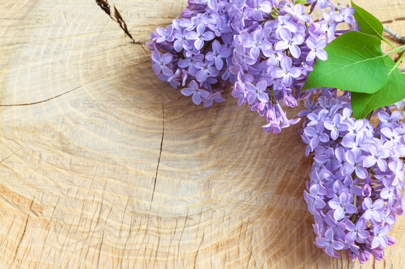 Beautiful lilac flowers on a wooden vintage board - Stock Photo - Images