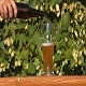 Beer and Hops Growing - VideoHive Item for Sale