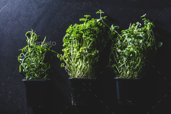 Three pots with different herbs on black background - Stock Photo - Images