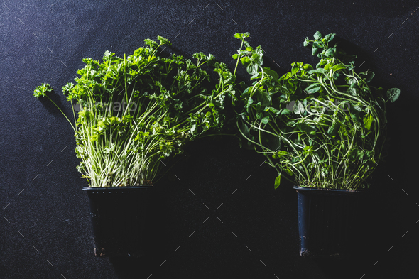 Two black pots with basil and parsley - Stock Photo - Images