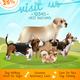 Dogs Walking Poster