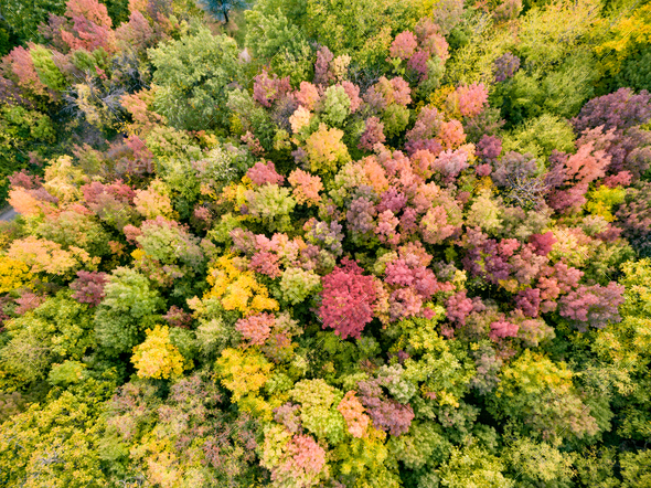 Colorful Autumn Trees In Forest - Stock Photo - Images