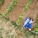 Picnic At Vineyard - PhotoDune Item for Sale