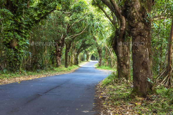 Canopy of trees over road - Stock Photo - Images