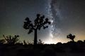 Milky Way in Joshua Tree - PhotoDune Item for Sale