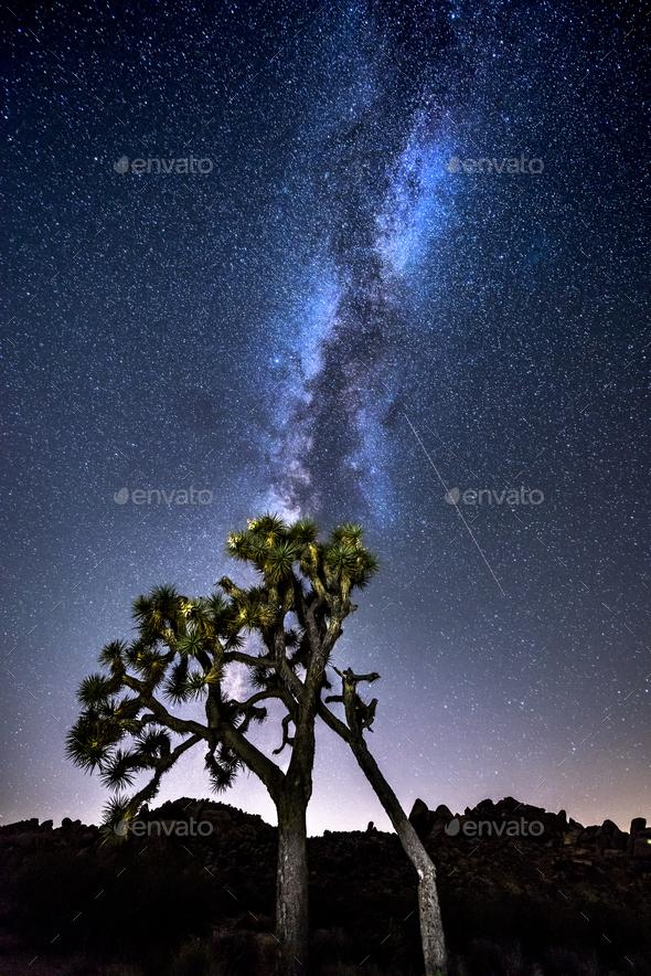Milky Way in Joshua Tree - Stock Photo - Images