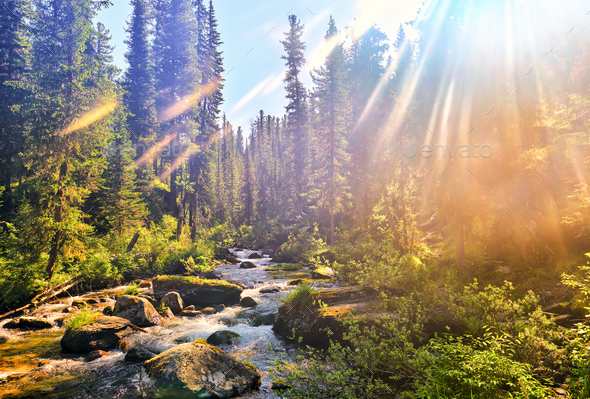 Beautiful Sunlight in Siberian Mountain Forest - Stock Photo - Images