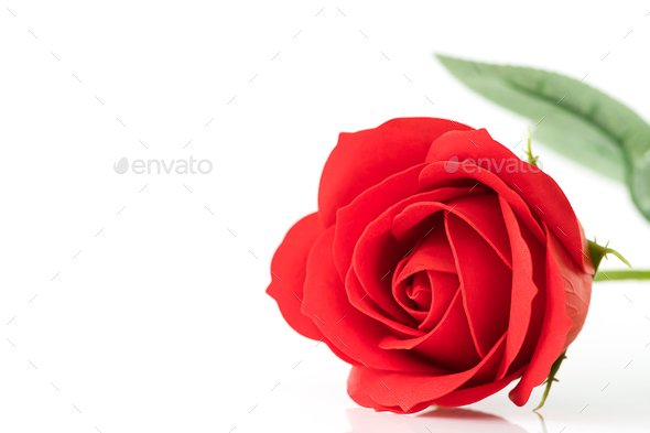 Single Red plastic fake roses on white - Stock Photo - Images