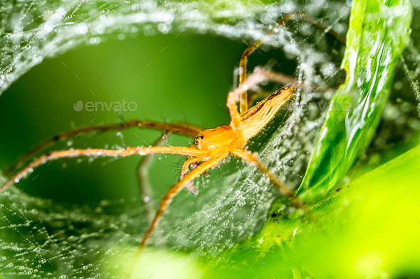 Spider and spider web on green leaf in forest - Stock Photo - Images