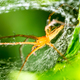 Spider and spider web on green leaf in forest - PhotoDune Item for Sale
