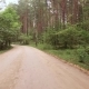 Car Rides on Paved Road through the Forest - VideoHive Item for Sale