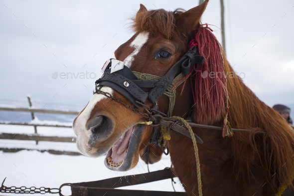 Horse in snow - Stock Photo - Images