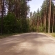 Road for Cars Lies Between the Tall Trees Mixed Forest - VideoHive Item for Sale