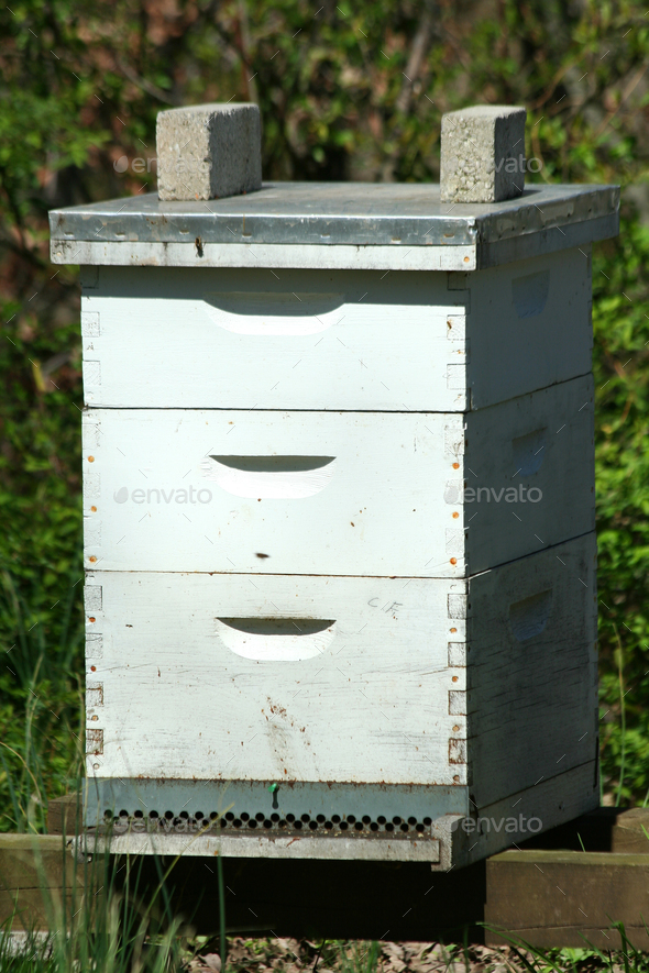 Beehive - Stock Photo - Images