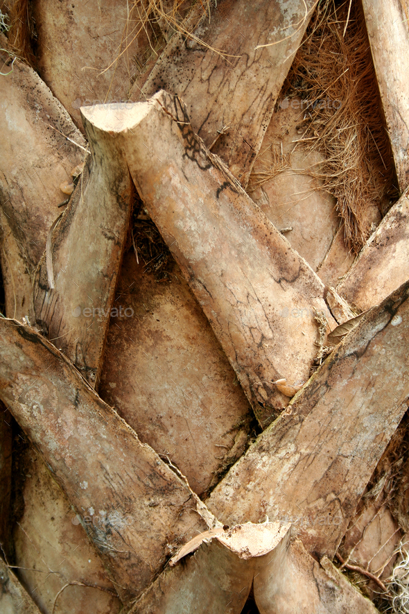 Palm tree trunk background - Stock Photo - Images
