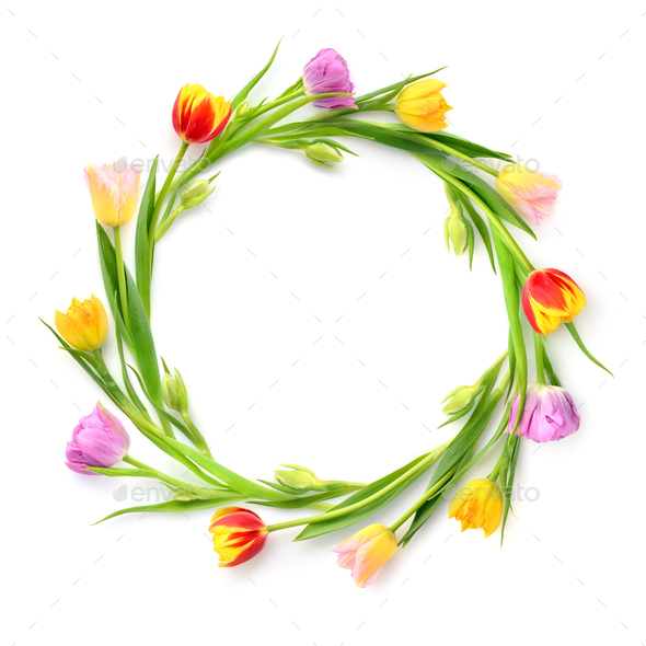 Circle of multicolored tulips on a white background with empty s - Stock Photo - Images