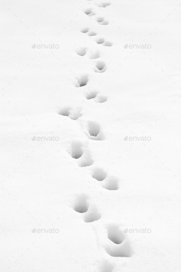Footprints trough the snow - Stock Photo - Images