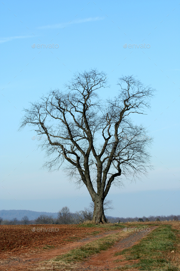 Single tree in a field - Stock Photo - Images