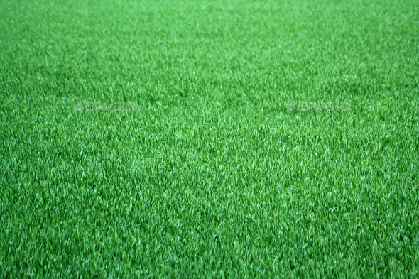 Grass background - Stock Photo - Images
