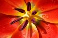 Flower macro - PhotoDune Item for Sale