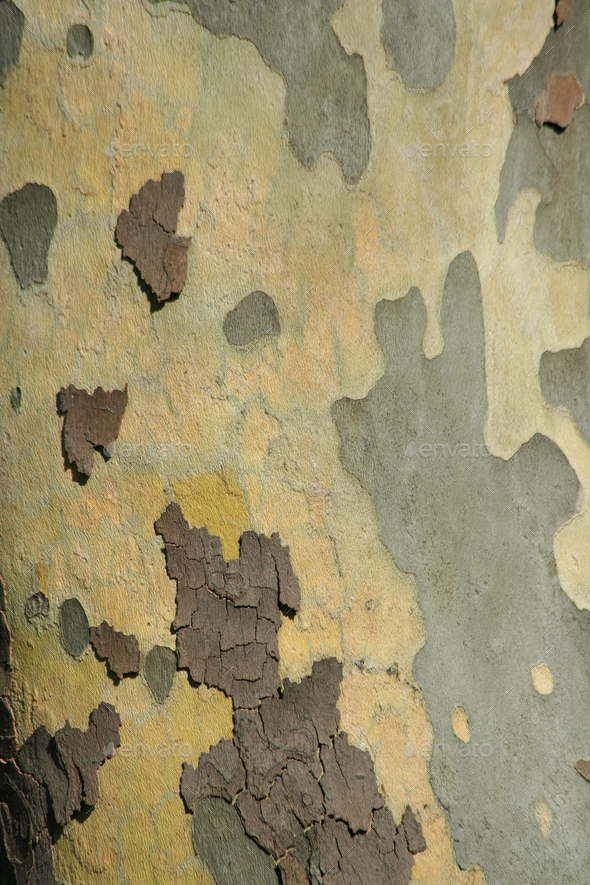 Tree bark - Stock Photo - Images