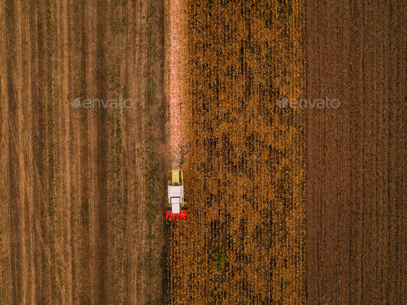 Corn maize harvest, aerial view of combine harvester - Stock Photo - Images