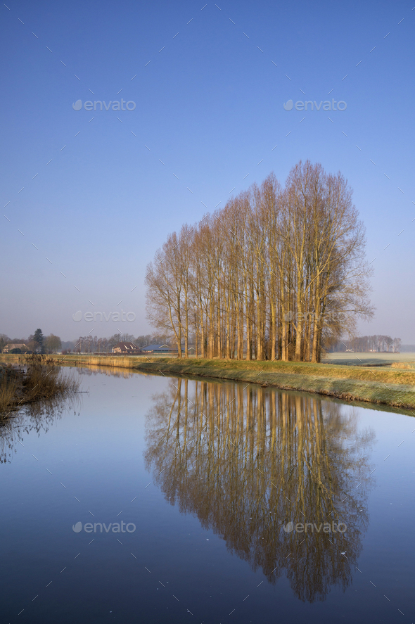 Row of trees along the Berkel - Stock Photo - Images