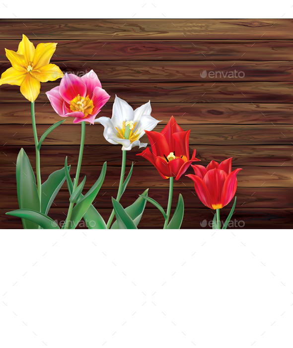 Tulips on Wooden Background - Flowers & Plants Nature