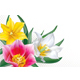 Bouquet Tulips on Transparent Background - GraphicRiver Item for Sale