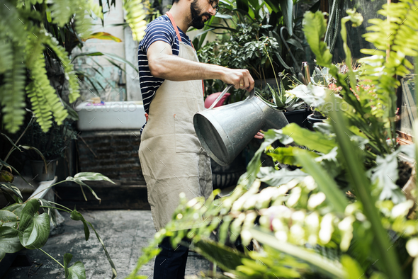 White man taking care of the plants - Stock Photo - Images