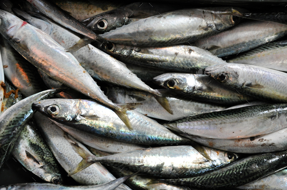 Background with fresh fish in a fish market - Stock Photo - Images