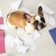 A Domestic Pet Has Taken on a Home. Torn Documents on White Floor. Pet Care Abstract Photo. Small - VideoHive Item for Sale