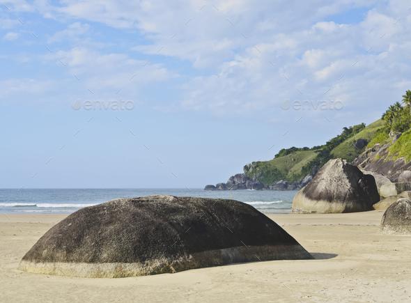 Bonete on Ilhabela Island, Brazil - Stock Photo - Images