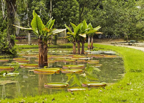 Botanical Garden in Rio de Janeiro - Stock Photo - Images